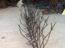 توليد كننده:حفاظ شاخ گوزني